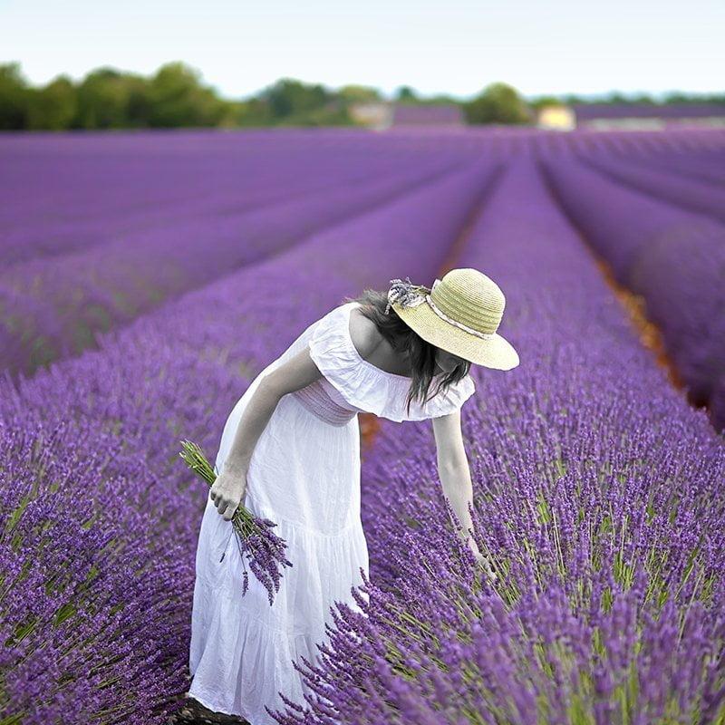 Lavender Woman